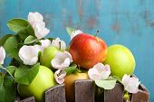 stock photo of crate  - Fresh apples with apple blossom in crate - JPG