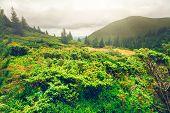 pic of mountain-range  - Chorna hora mountain range - JPG