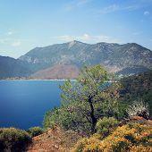 image of wild turkey  - View on Adrasan Bay from the road towards Sazak Bay  - JPG
