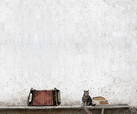 stock photo of accordion  - accordion and tabby cat sitting on the bench near the wall - JPG