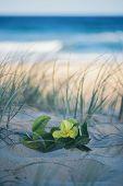 Sunshine Beach At Noosa, Sunshine Coast poster