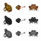 Vector Illustration Of Wildlife And Bog Sign. Set Of Wildlife And Reptile Stock Symbol For Web. poster