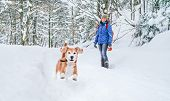 Active Beagle Dog Running In Deep Snow. Its Female Owner Lookking And Smiling. Winter Walks With Pet poster