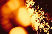 Bush On The Background Of A Strong Fire Flame. Plant On The Background Of Fire Glare. Forest Fire. S poster