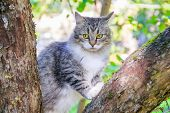 Fluffy Cat Is Sitting On A Tree Branch. Pet. Cat For A Walk In The Yard. The Cat Is Climbing Trees. poster