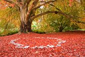 picture of fairy-mushroom  - Beautiful image of Autumn Fall colors in nature of flora and foliage fairy ring of mushrooms - JPG