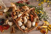foto of edible mushrooms  - studio photography of eatable mushrooms in wicker basket - JPG