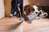 stock photo of dog-house  - Very terrible vacuum cleaner focus on dog head - JPG
