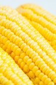 picture of corn-silk  - The close up grains of ripe corn - JPG