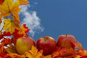 image of fall decorations  - Colorful Fall Border Three apples on fall leaves with sky background - JPG