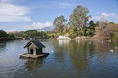 pic of pigeon  - lake and park named La Paloma Pigeon in Benalmadena Malaga Spain - JPG