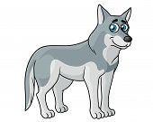 stock photo of horrific  - Cartoon grey wolf standing sideways looking at the viewer with blue eyes - JPG