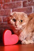 stock photo of tabby-cat  - British Cat - JPG
