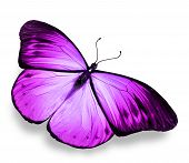 stock photo of violets  - Violet bright butterfly isolated on white background - JPG