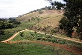 stock photo of feedlot  - view of green pasture in farm with cows feeding inside brazil - JPG