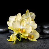 stock photo of yellow orchid  - beautiful spa concept of yellow orchid phalaenopsis on black zen stones with drops closeup - JPG