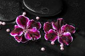 picture of geranium  - beautiful spa concept of geranium flower beads and black zen stones with drops in reflection water Royal Pelargonium closeup - JPG