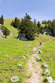 picture of bavaria  - Path to the summit of the mountain Breitenstein in Bavaria Germany - JPG