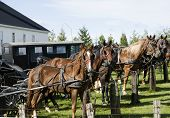 image of mennonite  - horse and buggy in the countryside on a sunny autumn day - JPG