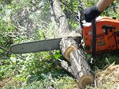 stock photo of firewood  - sawing wood with a chainsaw - JPG