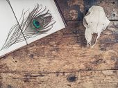 pic of taxidermy  - An old notebook with a peacock feather and a sheep skull on a wooden desk - JPG