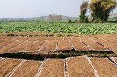 image of tobacco barn  - leaf Tobacco farmers and producers in Thailand - JPG