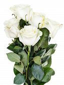 image of bunch roses  - side view of bunch of white roses isolated on white background - JPG