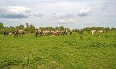 picture of herd horses  - Herd of wild horses grazing in nature in spring - JPG