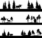foto of coniferous forest  - set of different landscapes with coniferous trees and wild animals - JPG