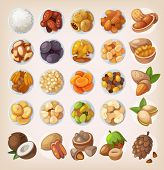 picture of pecan tree  - Colorful set of dried fruit and nuts - JPG