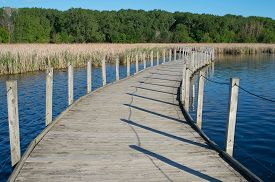 picture of cattail  - wood lake park boardwalk crossing lake and cattail marsh bordered by forest in richfield minnesota - JPG