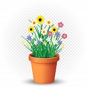 Flowerpot With Flowers Plant And Grass On White Transparent Background. Nature Spring Or Summer Abst poster