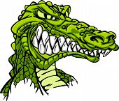 pic of gator  - Cartoon Image of a Gator or Crocodile - JPG