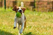 Dog Run Beagle Jumping Fun poster