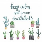 Hand Drawn Set Of Cactus, Succulents And Calligraphy Quote Keep Calm And Grow Succulents . poster