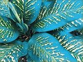 Tropical Foliage Plant In Sunny Garden. Summer Foliage In Cyan Digital Illustration. Natural Leaf Or poster