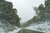 Road Through Forest Covered With Snow. Infrastructure In Wintertime Landscape poster