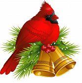 pic of cardinal-bird  - Cardinal Bird with Christmas bells over white - JPG