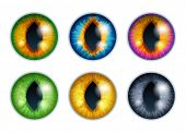 Fantasy Eyes Set - Assorted Colors. Iris Pupils Design. Cat Or Snake Eyes. Color Contact Lenses. Col poster