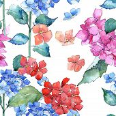 Постер, плакат: Wildflower Hydrangea Flower Pattern In A Watercolor Style Full Name Of The Plant: Hydrangea Aqua