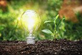Energy Saving Lamps And Planting Trees On The Soil Ground Electric Energy Saving Concept poster