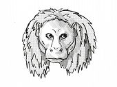 Retro Cartoon Style Drawing Of Head Of An Uakari, A Small Species Of Monkey, Native To South America poster