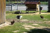 Cute Various Colors Of Little Rabbits In A Farm.farm Animals. Rabbits On The Farm, Walk On The Green poster