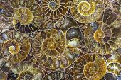 Closeup Of An Ammonite Prehistoric Fossil - Detail poster