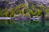 Autumn Landscape With Reflection In A Lake In The Alpine Mountainsю Autumn Scenery Of Colorful Trees poster