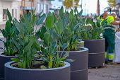 Landscaping Of The City. Installation Of Large Pots For Plants On The Main Street.the Work Of Urban  poster