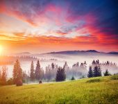 Tranquil morning moment in alpine valley. Location place of Carpathian mountains, Ukraine, Europe. I poster