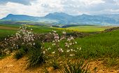 Panorama Sunny Green Slopes Of Ifrane At Moyen Atlas Mountains, Morocco poster