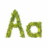 picture of storybook  - Leafy storybook font depicting a letter A in upper and lower case - JPG