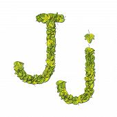 stock photo of storybook  - Leafy storybook font depicting a letter J in upper and lower case - JPG